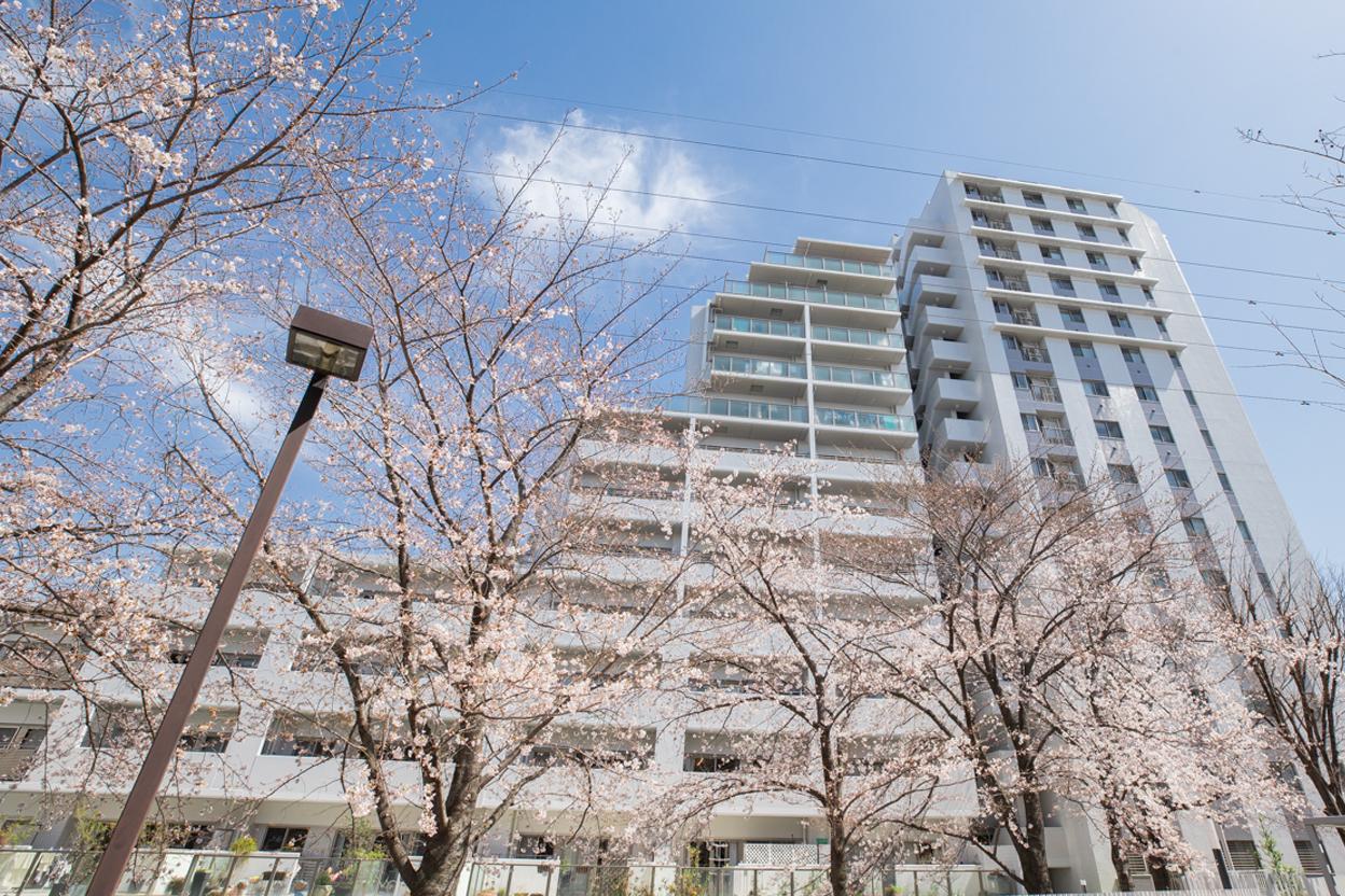 桜並木を敷地内に配置した総戸数171戸の大規模マンション