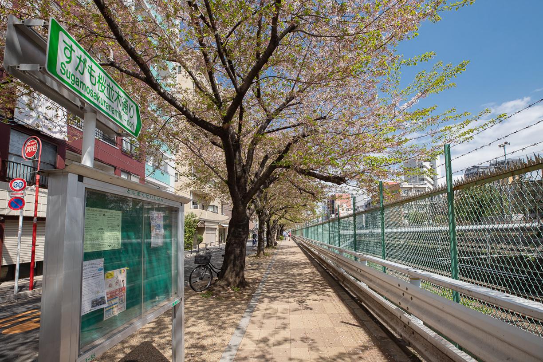 巣鴨桜並木通り 徒歩約2分